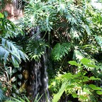 Zoologisch - Botanischer Garten Wilhelma - Stuttgart