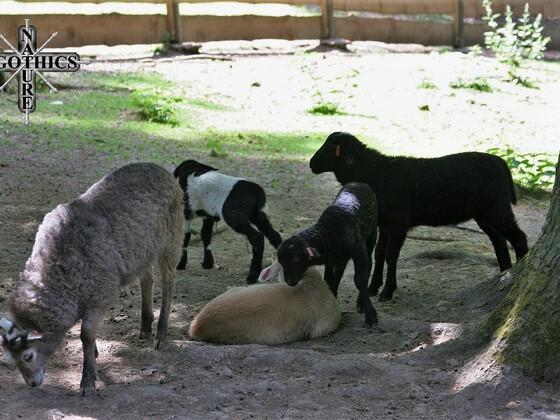 Wildpark - Hundshaupten