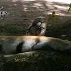 Tiergarten Nürnberg / Nuremberg Zoo